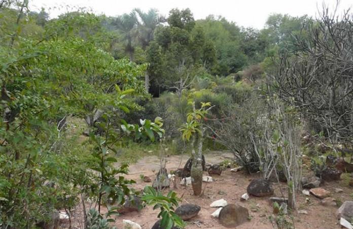 Arboretum d'Ambatobe
