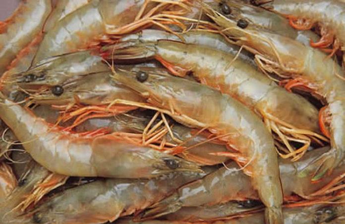 Production de crevettes